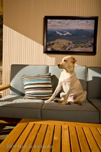 Dog Friendly Spaces - About the Designer